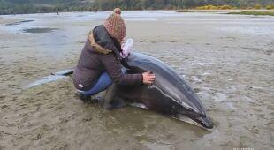 Delfiny utknęły na plaży